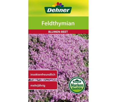 Dehner Samen Feldthymian