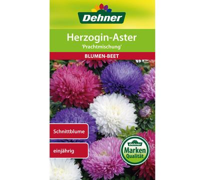 Dehner Samen für Herzogin-Aster 'Prachtmischung'