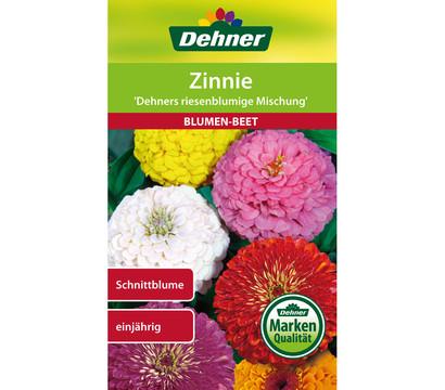 Dehner Samen für Zinnie 'Dehners riesenblumige Mischung'