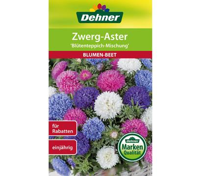 Dehner Samen für Zwerg-Aster 'Blütenteppich-Mischung'