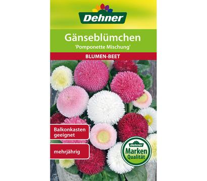 Dehner Samen Gänseblümchen 'Pomponette Mischung'