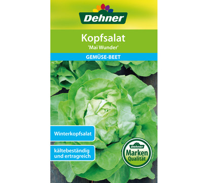 Dehner Samen Kopfsalat 'Mai Wunder'