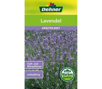Dehner Samen Lavendel