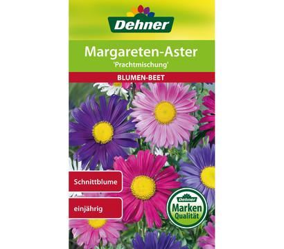 Dehner Samen Margareten-Aster 'Prachtmischung'