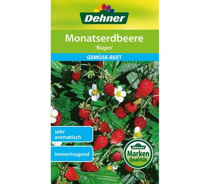 Dehner Samen Monatserdbeere 'Rügen'