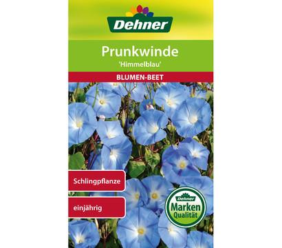 Dehner Samen Prunkwinde 'Himmelblau'