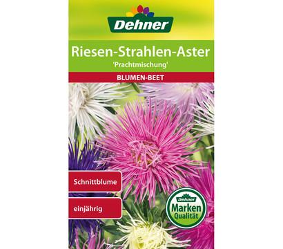 Dehner Samen Riesen-Strahlen-Aster 'Prachtmischung'