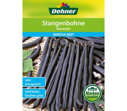 Dehner Samen Stangenbohne 'Blauhilde'