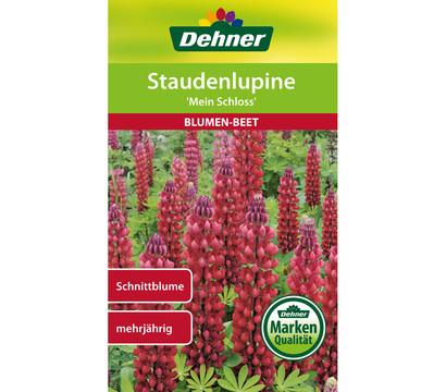 Dehner Samen Staudenlupine 'Mein Schloss'