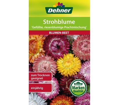 Strohblumen Trocknen dehner samen strohblume gefüllte riesenblumige prachtmischung