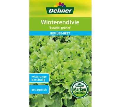 Dehner Samen Winterendivie 'Escariol grüner'