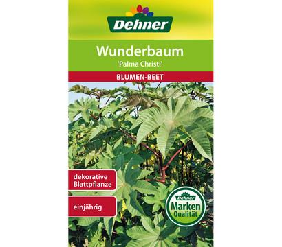 Dehner Samen Wunderbaum 'Palma Christi'