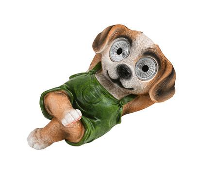 Dehner Solar-Hund 'Wutz'