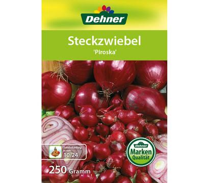 Dehner Steckzwiebel 'Piroska'