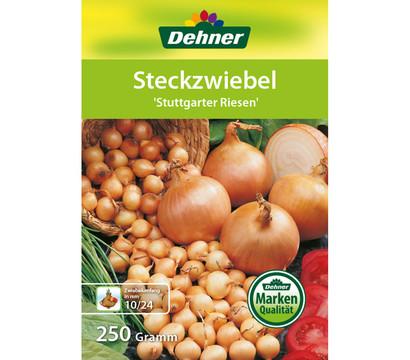 Dehner Steckzwiebel 'Stuttgarter Riesen'