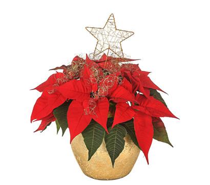 Dekorierter Weihnachtsstern im Keramik-Goldtopf