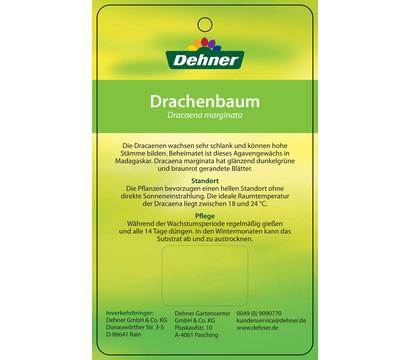 drachenbaum karussell dehner garten center. Black Bedroom Furniture Sets. Home Design Ideas