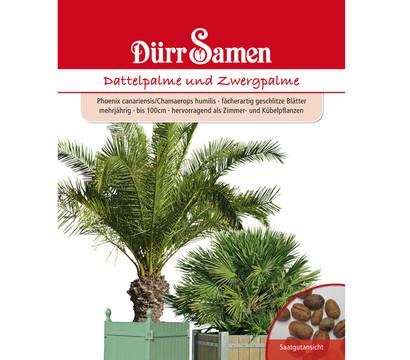Dürr Saatgut Dattel- und Zwergpalme