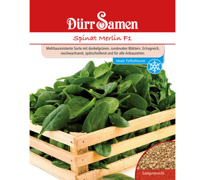 Dürr Saatgut Spinat Merlin F1 'Spinacia oleracea'