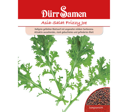 Dürr Samen Asia-Salat 'Frizzy Joe'