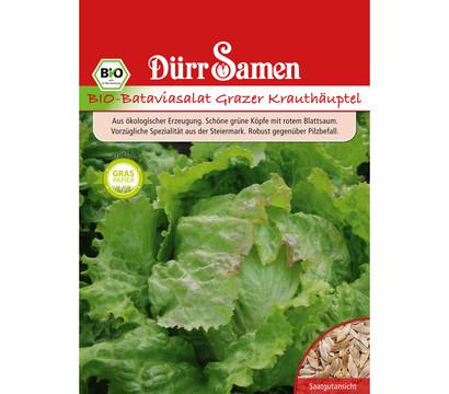 Dürr Samen Bio-Bataviasalat Grazer Krauthäuptel 'Lacuta sativa'