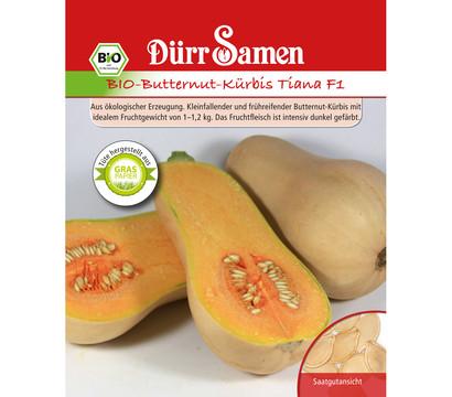Dürr Samen Bio-Butternut-Kürbis Tiana F1 'Cucurbita moschata'