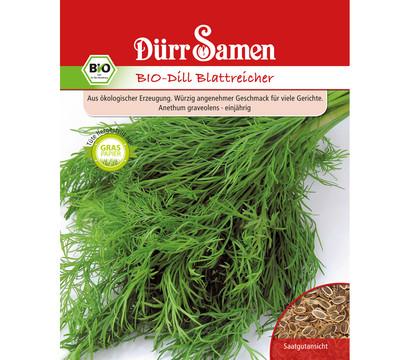 Dürr Samen Bio-Dill Blattreicher 'Anethum graveolens'