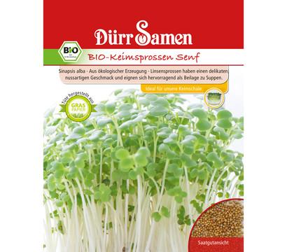Dürr Samen Bio-Keimsprossen Senf