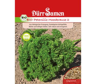 Dürr Samen Bio-Petersilie Mooskrause 2