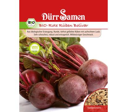 Dürr Samen Bio-Rote Rüben Bolivar 'Beta vulgaris'