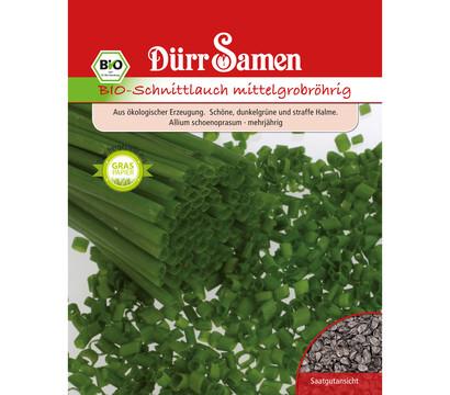 Dürr Samen Bio-Schnittlauch mittelgrobröhrig 'Allium schoenoprasum'