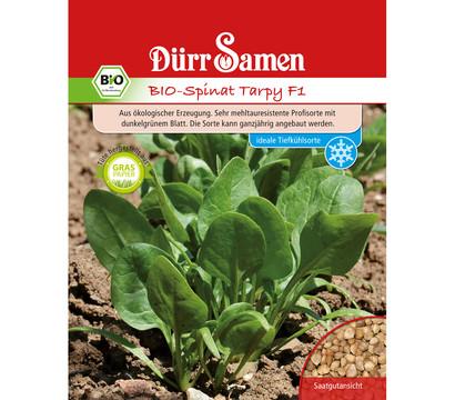 Dürr Samen Bio-Spinat Tarpy F1 'Spinacia oleracea'