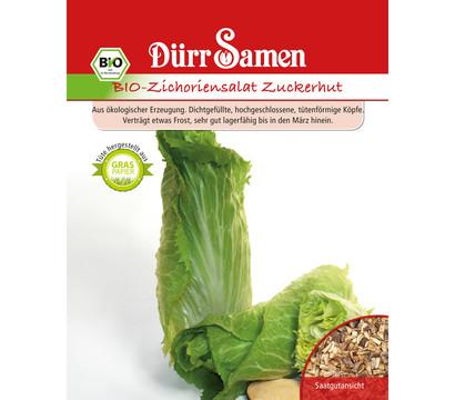 Dürr Samen Bio-Zichoriensalat Zuckerhut 'cichorium intybus'