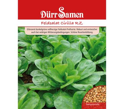 Dürr Samen Feldsalat 'Cirilla RZ'
