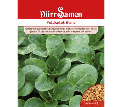 Dürr Samen Feldsalat 'Elan'