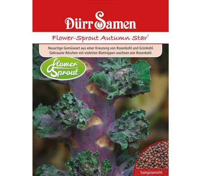 Dürr Samen Flower-Sprout 'Autumn Star'