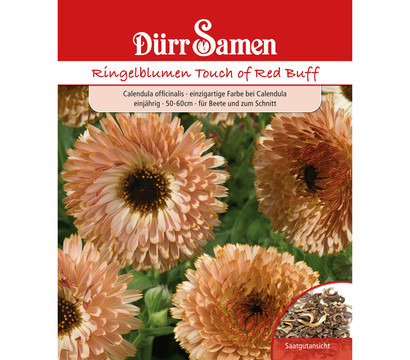 Dürr Samen Ringelblumen 'Touch of Red Buff'