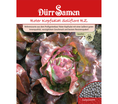 Dürr Samen Roter Kopfsalat 'Soliflore RZ'