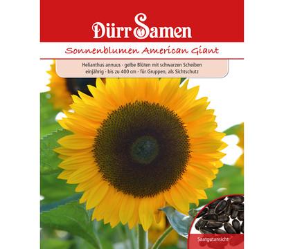 Dürr Samen Sonnenblume 'American Giant'