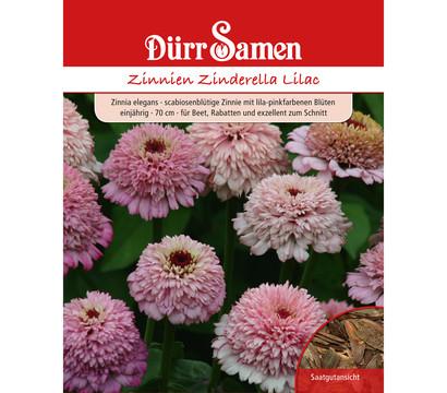 Dürr Samen Zinnie 'Zinderella Lilac'