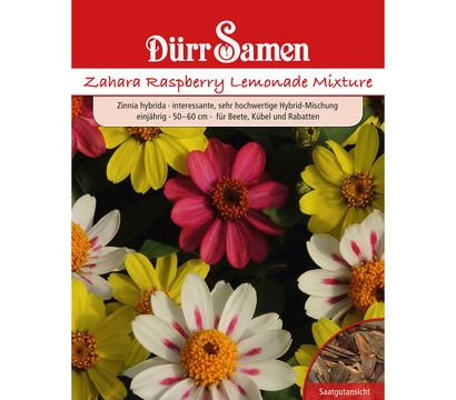 Dürr Samen Zinnien 'Raspberry Lemon Mixture'