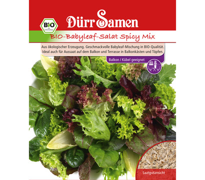d rr samen bio babyleaf salat 39 spicy mix 39 dehner garten center. Black Bedroom Furniture Sets. Home Design Ideas