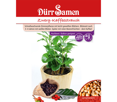D rr samen zwerg kaffeestrauch dehner garten center - Zimmerpflanze mit roten blattern ...