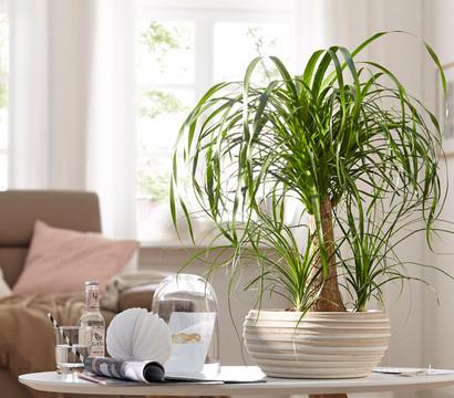 elefantenfu katze latest modern wohnbereich by silvia. Black Bedroom Furniture Sets. Home Design Ideas