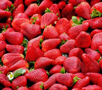 Erdbeere 'Delizz'