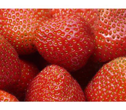 Erdbeere 'Elsanta', 8er Schale