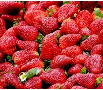 Erdbeere 'Senga Sengana®', 8er Schale