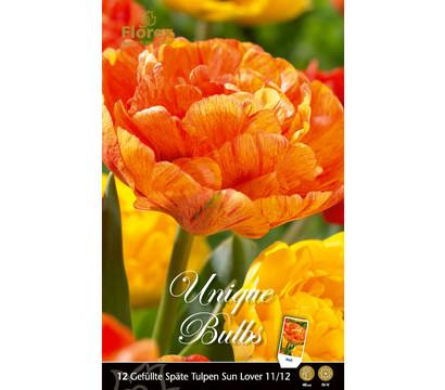 Florex Blumenzwiebel Gefüllte Späte Tulpe 'Sun Lover'