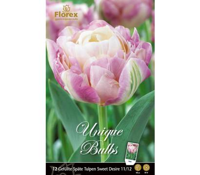Florex Blumenzwiebel Gefüllte Späte Tulpe 'Sweet Desire'