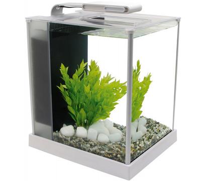 fluval spec 3 nano aquarium 10 liter dehner garten center. Black Bedroom Furniture Sets. Home Design Ideas